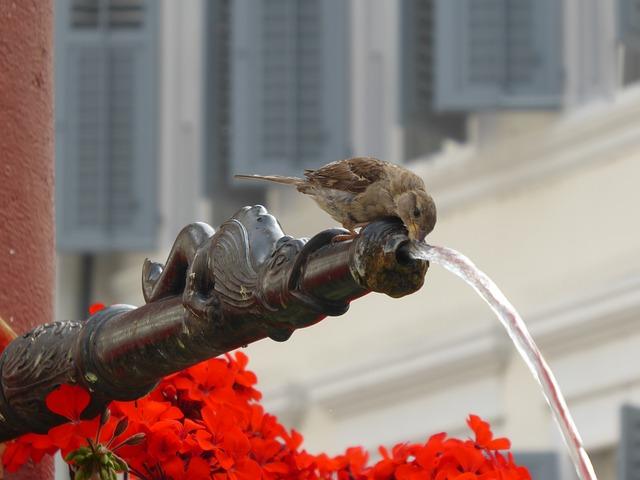 pijící ptáček