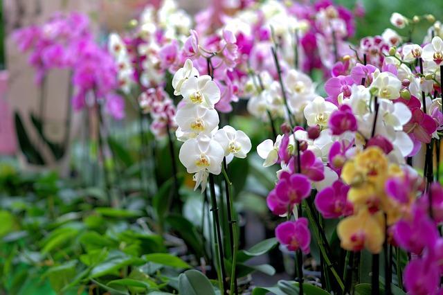 Řada barevných orchidejí