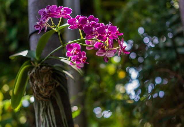 Orchidej rostoucí na stromě